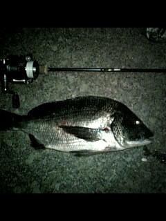 ライト黒鯛