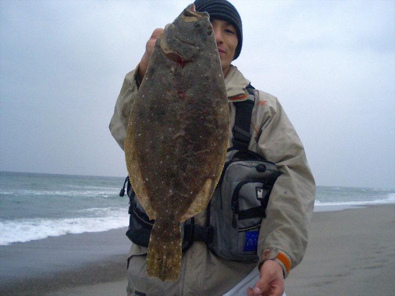 遠州灘ヒラメ続釣
